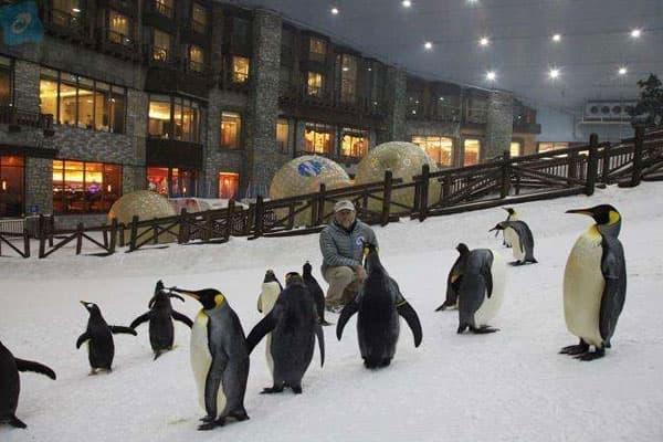 Ski Dubai Penguin Experience